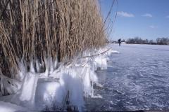 Foto van de maand: februari